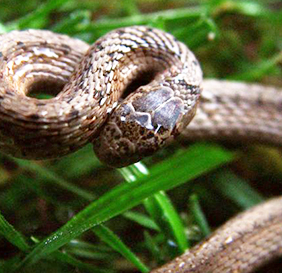 282x273_snake